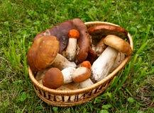 Pilze in einem Korb. Lizenzfreie Stockfotos