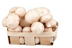 Pilze in einem Korb Stockbild
