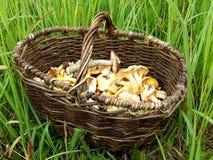 Pilze in einem Korb Lizenzfreie Stockfotografie