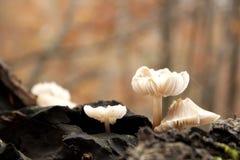 Pilze in einem Stamm der treeÂs Lizenzfreies Stockbild