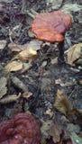 Pilze in einem Wald stockbild