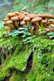 Pilze in einem Wald Lizenzfreie Stockfotografie