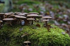 Pilze in einem Wald im Herbst Lizenzfreie Stockfotografie