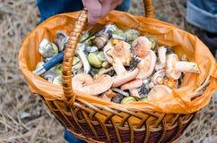 Pilze in einem Weidenkorb Lizenzfreie Stockfotografie