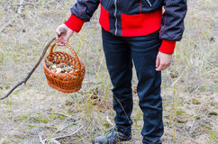 Pilze in einem Weidenkorb stockfoto