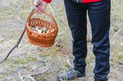 Pilze in einem Weidenkorb lizenzfreies stockfoto