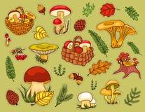 Pilze eingestellt Stockbilder