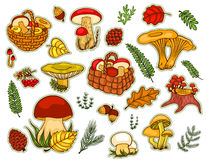Pilze eingestellt lokalisiert auf Weiß Lizenzfreies Stockfoto