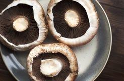 Pilze führt in fine das Zeigen von Kiemen einzeln auf Stockbilder