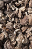 Pilze für Verkauf, abstrakter Hintergrund Lizenzfreie Stockfotos