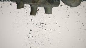 Pilze fallen in wasser- Zeitlupe stock video