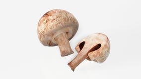 Pilze getrennt auf weißem Hintergrund Stockfotografie