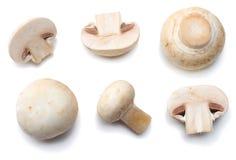 Pilze getrennt auf weißem Hintergrund Beschneidungspfad eingeschlossen Stockbild