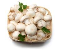 Pilze getrennt auf weißem Hintergrund Beschneidungspfad eingeschlossen Stockfotos