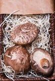 Pilze im braunen Korb stockbild