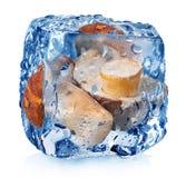 Pilze im Eiswürfel Lizenzfreie Stockbilder