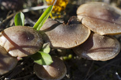Pilze im Frühjahr Lizenzfreie Stockbilder