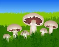 Pilze im Gras Stockfoto