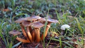 Pilze im Gras auf dem Waldweg Unscharfer Hintergrund Stockfotos