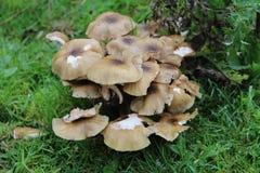 Pilze im Holz Stockbild