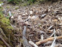 Pilze im Holz Stockfoto