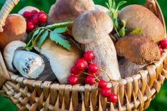 Pilze im Korb Lizenzfreie Stockfotografie