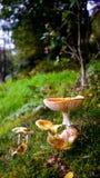 Pilze im Malvern-Holz Lizenzfreie Stockfotografie