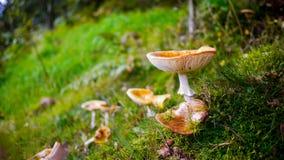Pilze im Malvern-Holz Lizenzfreie Stockbilder