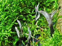 Pilze im Moos Stockfotografie