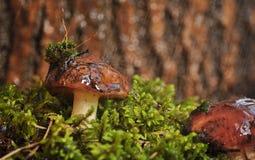 Pilze im Regen Lizenzfreie Stockbilder