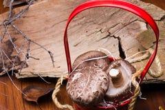 Pilze im roten Korb stockbilder