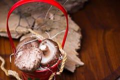 Pilze im roten Korb lizenzfreie stockbilder
