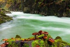 Pilze im Stein im Tal Vintgar sättigen sich Lizenzfreie Stockbilder