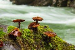 Pilze im Stein im Tal Vintgar sättigen sich Stockbild