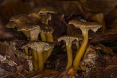 Pilze im Unterholz Lizenzfreie Stockfotos