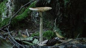 Pilze im Wald stock video