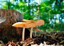 Pilze im Wald Lizenzfreie Stockfotografie