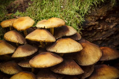 Pilze im Wald Stockfoto