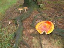 Pilze im Wald Lizenzfreie Stockbilder