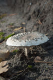 Pilze im Wald stockfotos