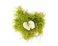 Pilze im Wald auf einem weißen Hintergrund Lizenzfreie Stockbilder