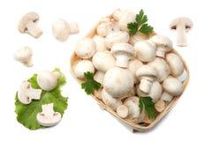 Pilze mit der Petersilie lokalisiert auf weißem Hintergrund Beschneidungspfad eingeschlossen Stockfotos