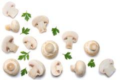 Pilze mit der Petersilie lokalisiert auf weißem Hintergrund Beschneidungspfad eingeschlossen Lizenzfreie Stockfotos