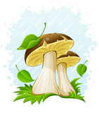 Pilze mit grünem Blatt im Gras unter dem Regen stockbild