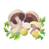 Pilze mit Petersilie Lizenzfreie Stockfotos