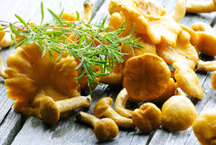 Pilze mit Thymian Stockbild