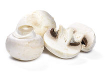 Pilze oder weiße Pilze Stockbild