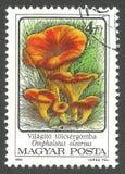 Pilze, Omphalotus olearius lizenzfreies stockfoto