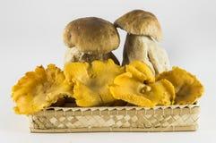 Pilze: porcini und Pfifferlinge lizenzfreies stockbild