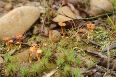 Pilze, Südküste, New South Wales, Australien Lizenzfreie Stockfotografie